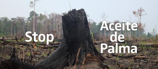 Selva devastada por incendios en Indonesia - leyenda Stop Aceite de Palma