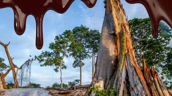 Fotomontaje: chocolate fluye sobre una imafen de la selva talada