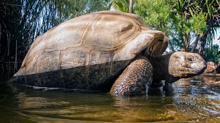 Seychelles ¿Paraíso ecológico o campo de batalla? - Salva la Selva