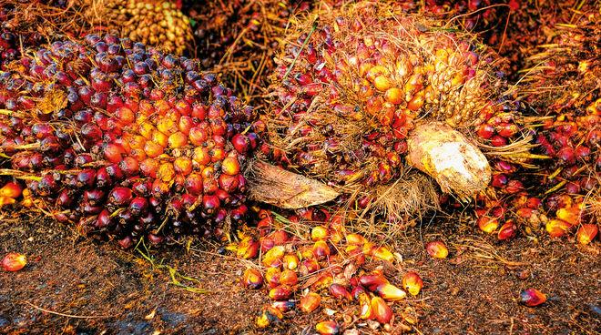Resultado de imagen de aceite de palma