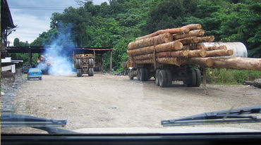 Transporte de madera tropical