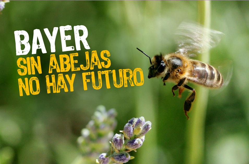 Las abejas necesitan ayuda salva la selva for Desde cuando hay clausula suelo