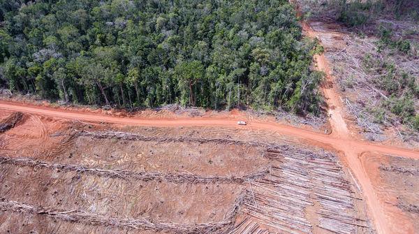 Vista aérea de la destrucción de la selva para establecer plantaciones de palma aceitera en Papua, Indonesia