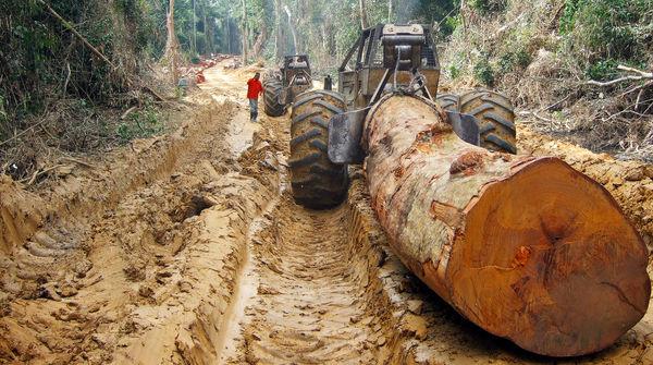 Un tronco talado y transportado por la selva