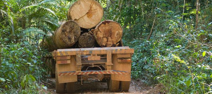 Camión cargado de madera