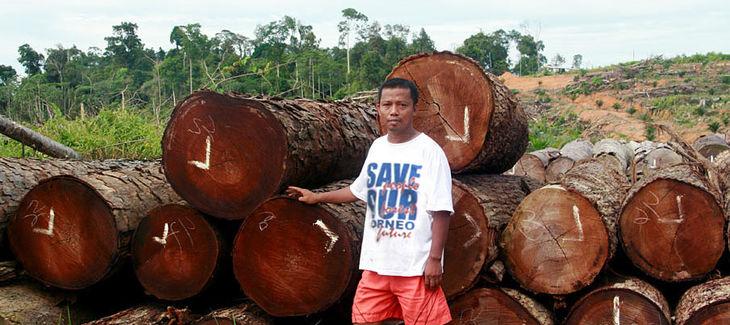 Indonesia: éxito en los juzgados por tala ilegal