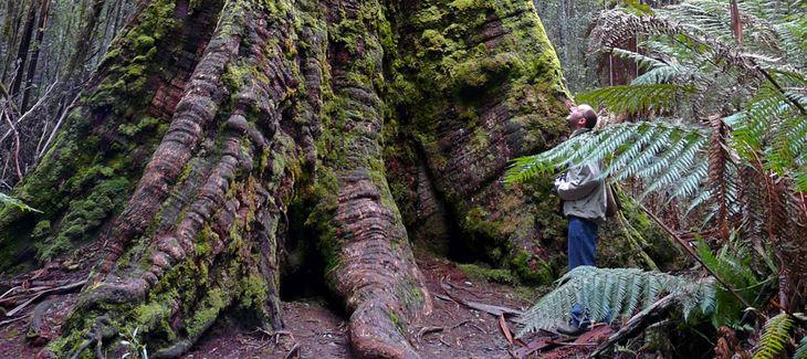 Zona de naturaleza salvaje de Tasmania patrimonio mundial UNESCO