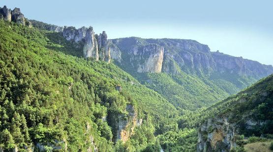 Bosque y montañas en Francia