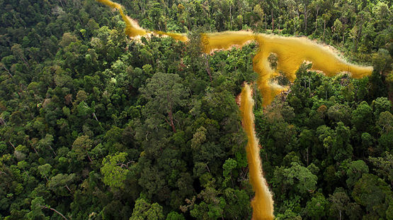 Selva en la Guayana francesa