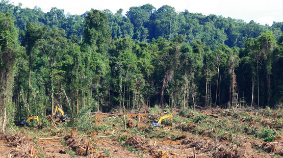 Excavadoras tumbando la selva