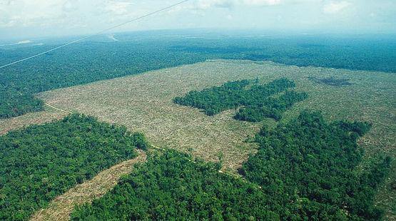 Selva destruida para monocultivos industriales