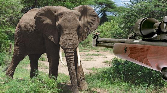 Elefante, caza ilegal
