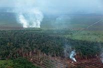Selva en Indonesia